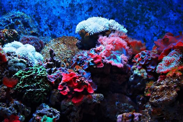 Tropische algen und korallen