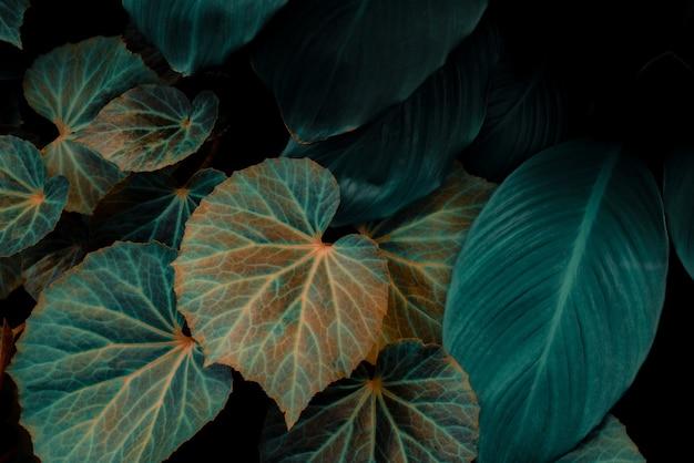 Tropische blätter abstrakte grüne blätter textur natur hintergrund