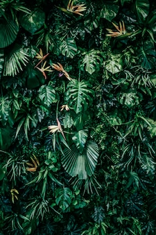 Tropische blätter als natur- und umwelthintergrund botanischer garten und blumenhintergrund pflanzengr...