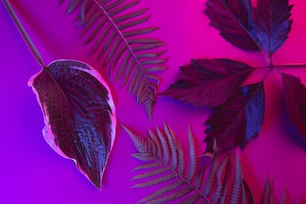 Tropische blätter auf einem schwarzlichthintergrund