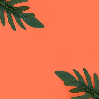 Tropische blätter auf orange hintergrund