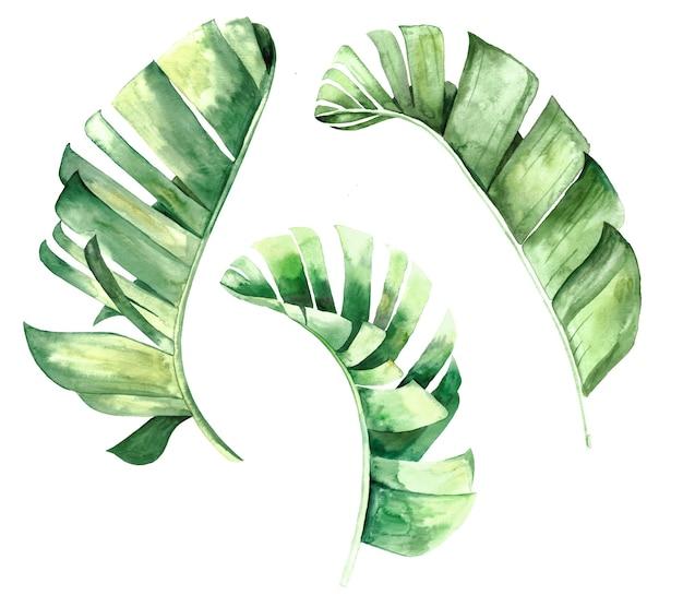 Tropische blätter der aquarellbanane setzten illustration lokalisiert
