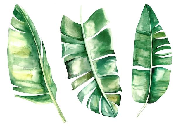 Tropische blätter der aquarellbanane stellten illustration lokalisiert ein