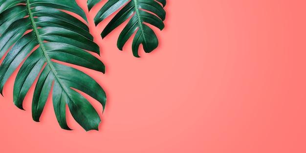 Tropische blätter des philodendron auf minimalem sommer des korallenroten farbhintergrundes