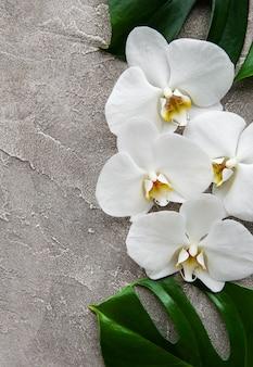 Tropische blätter monstera und weiße orchideenblumen