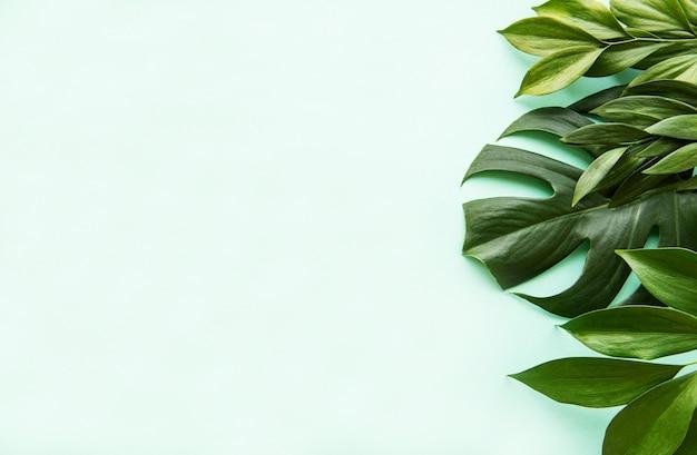 Tropische blätter und monstera-blatt
