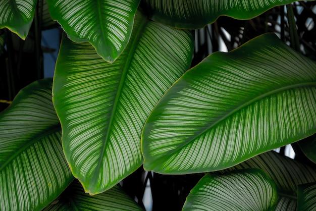 Tropische blumen der hintergrundbeschaffenheit und natürliches konzept der blätter