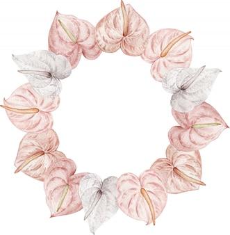 Tropische blumen, erröten rosa und weiße anthurien. handgezeichneter blumenkreisrahmen des aquarells