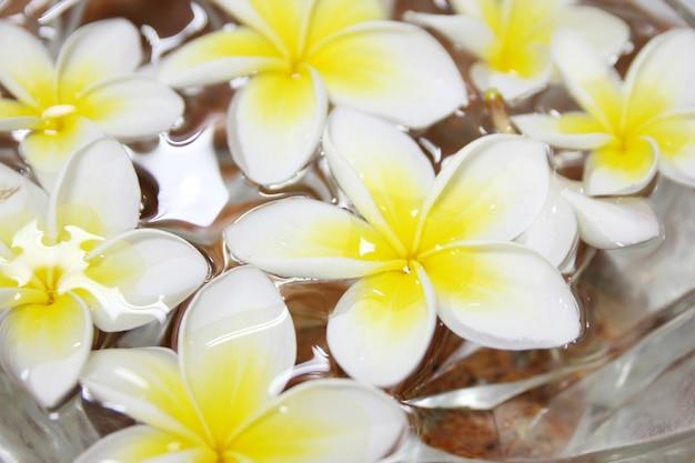Tropische blumen frangipani schwimmt im wasser