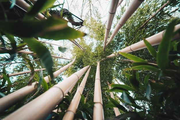 Tropische exotische bäume in einem botanischen garten