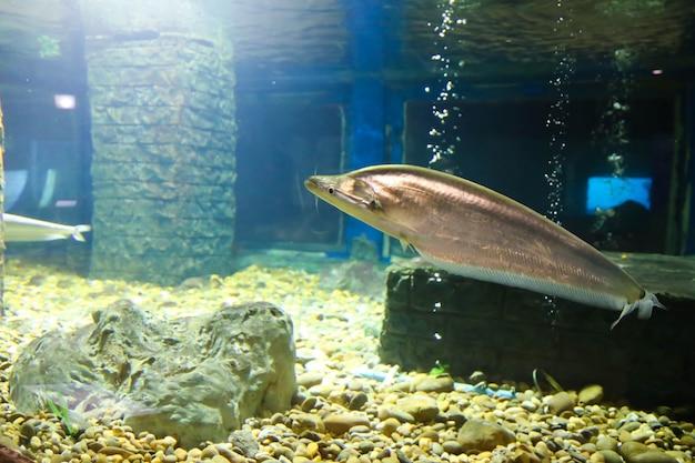 Tropische fische, die im aquarium schwimmen
