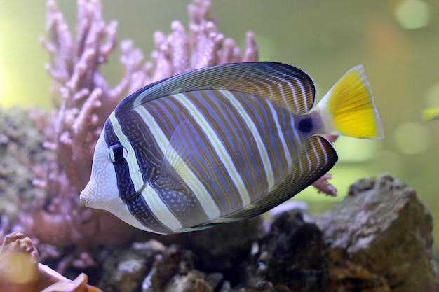 Tropische fische in einem korallenriff