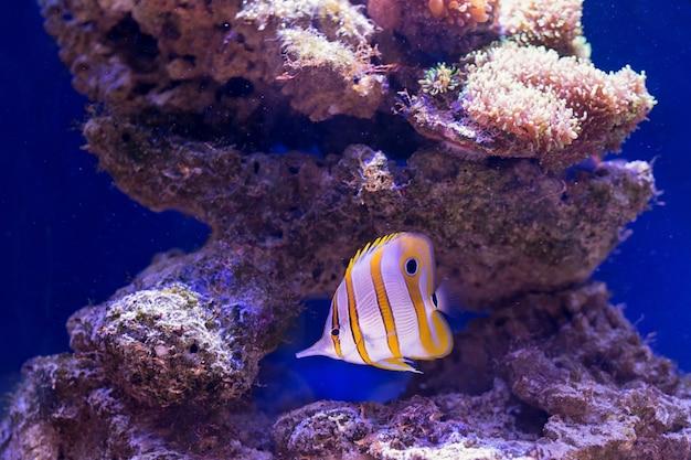 Tropische fische schwimmen in der nähe von korallenriffen. tiefenschärfe