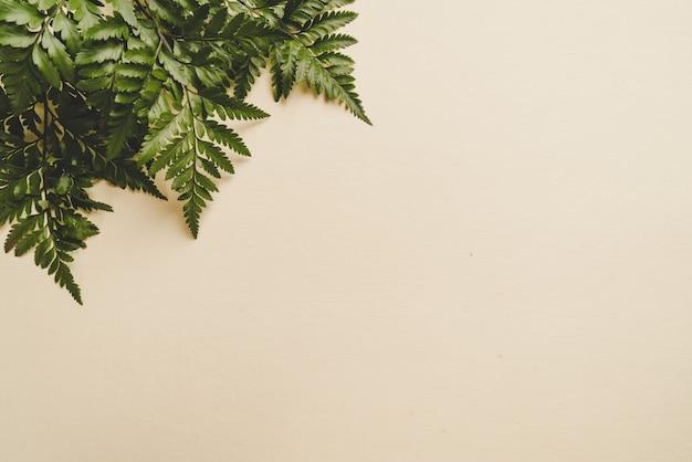 Tropische grünblätter auf braunem beige hintergrund