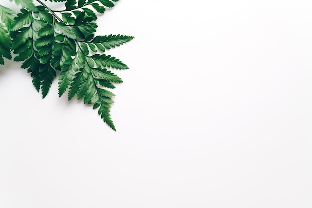 Tropische grüne blätter auf farbe