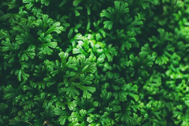 Tropische grüne blätter strukturiert und hintergrund, naturkonzept