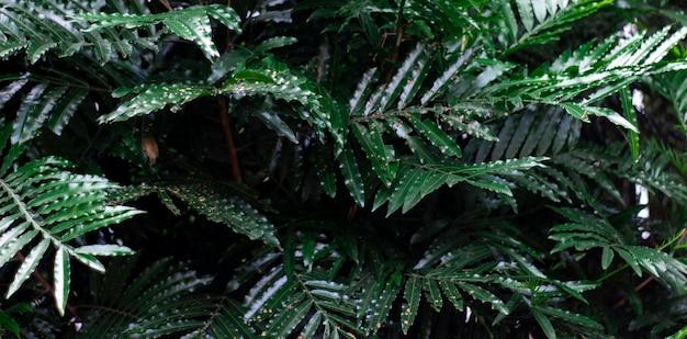 Tropische grüne blätter