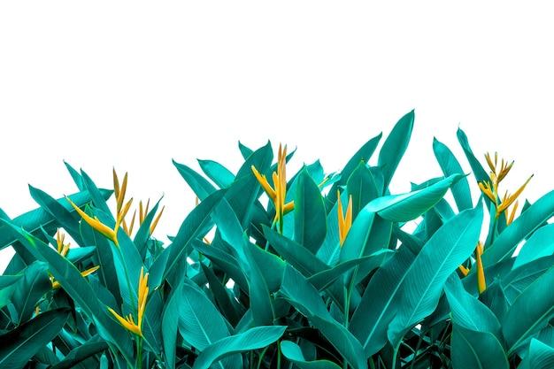 Tropische grüne blattbeschaffenheit, grüne blätter hintergrundnatur dunkelgrüner hintergrund, konzeptnatur und tropische pflanze