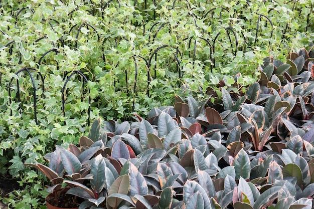 Tropische grünpflanze im sommergarten stockfoto