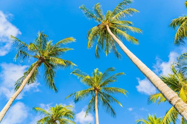 Tropische kokospalme der schönen natur auf weißer wolke des blauen himmels um strandmeerozean