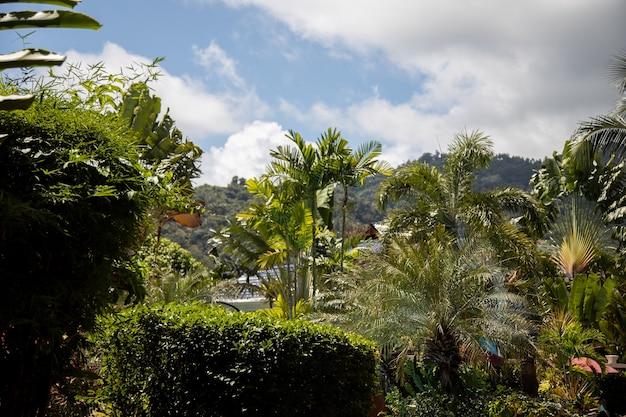 Tropische landschaft an einem sonnigen tag.