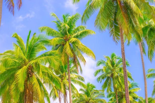 Tropische landschaft hohe grüne palmen blauer himmel hintergrund reisen asien tourismus
