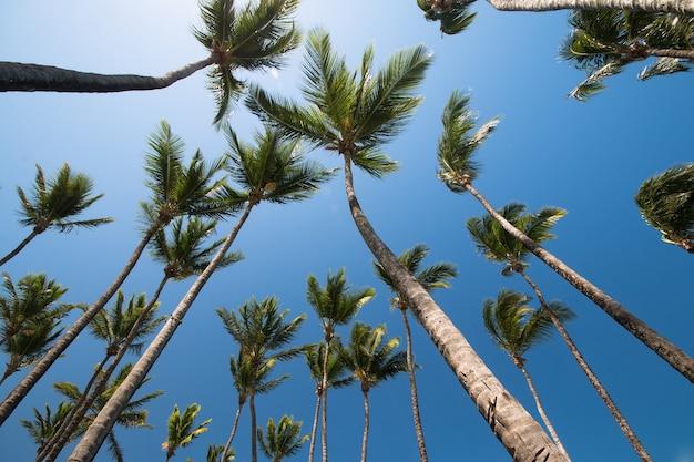 Tropische landschaft mit kokospalmen und blauem himmel im hintergrund.