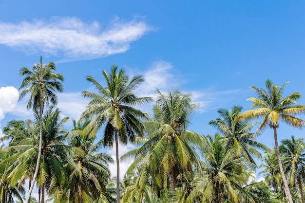Tropische landschaft mit palmen selektiver fokus.
