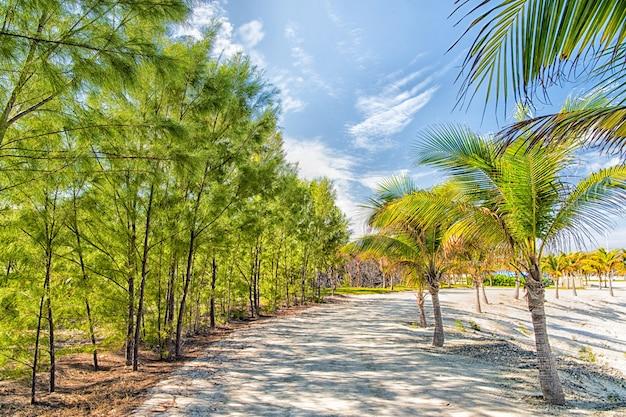 Tropische landschaft von palmen und bäumen auf weißem sandweg oder straße zu sehen oder meerwasser an sonnigen tagen auf blauem himmelshintergrund. sommerurlaub und urlaub. idyllisches exotisches resort.