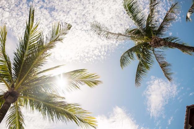 Tropische naturlandschaftslandschaft von palmenniederlassungen auf dem blauen himmel mit weißer wolkenphotographie von unterhalb