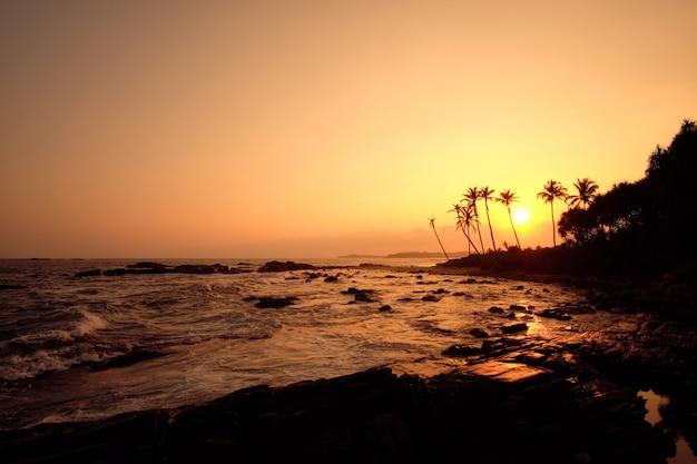 Tropische orange sonnenuntergang palm silhouette landschaft. sri lanka beach