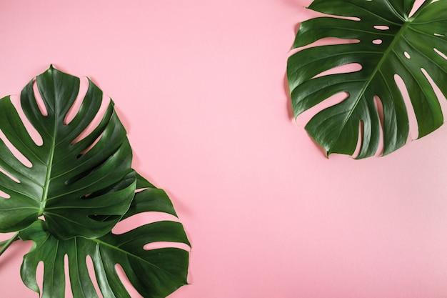 Tropische palmblätter auf abstraktem pastellrosa hintergrund
