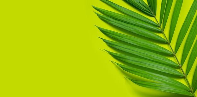 Tropische palmblätter auf grünem hintergrund.