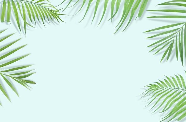 Tropische palmblätter auf hellblauem hintergrund.