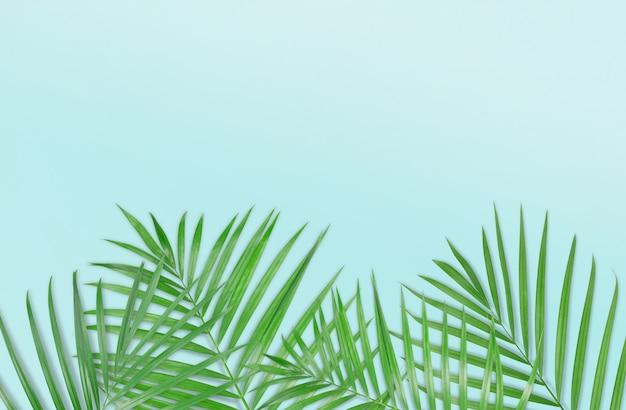 Tropische palmblätter auf hellblauem hintergrund