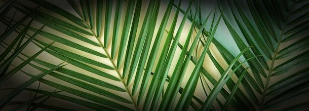 Tropische palmblätter auf pastellgelbem hintergrund. flache lage, ansicht von oben