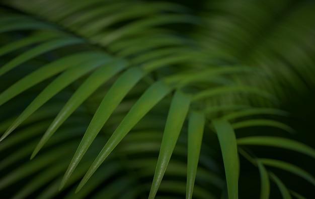 Tropische palmblätter hintergrund tropisches sommerblatt