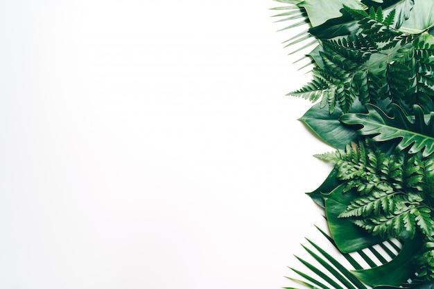 Tropische palmblätter mit kopienraum