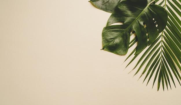 Tropische palmblätter mit kopierraum
