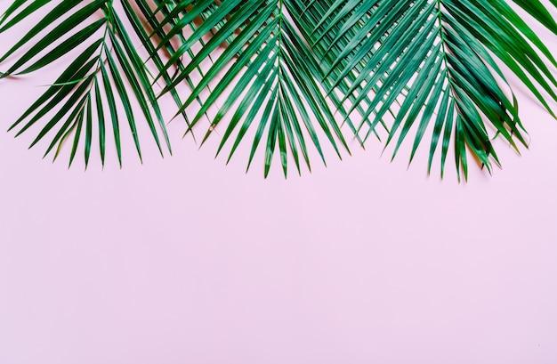 Tropische palmblätter