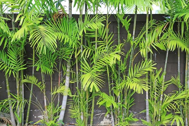 Tropische palmblattdekoration im garten.