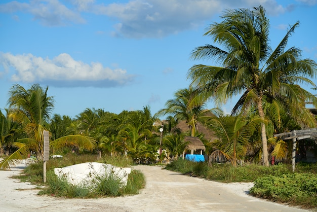 Tropische palme mexiko der holbox-insel
