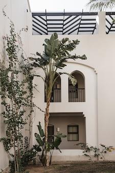 Tropische palme mit üppigen grünen blättern in der nähe des weißen hauses, resortgebäude.