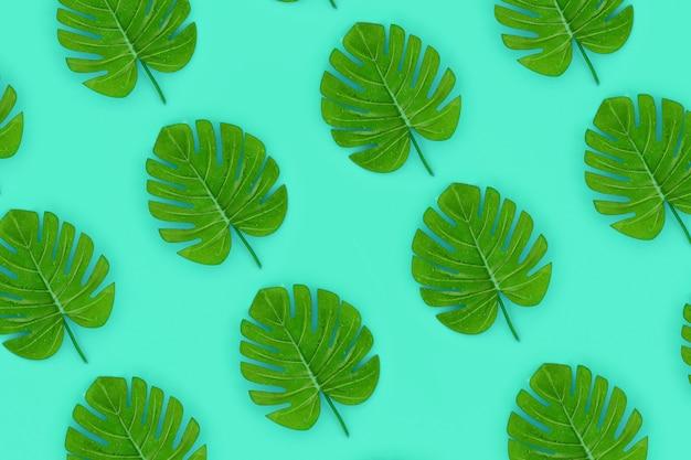 Tropische palme monstera blätter liegt auf einem pastellfarbenen papier