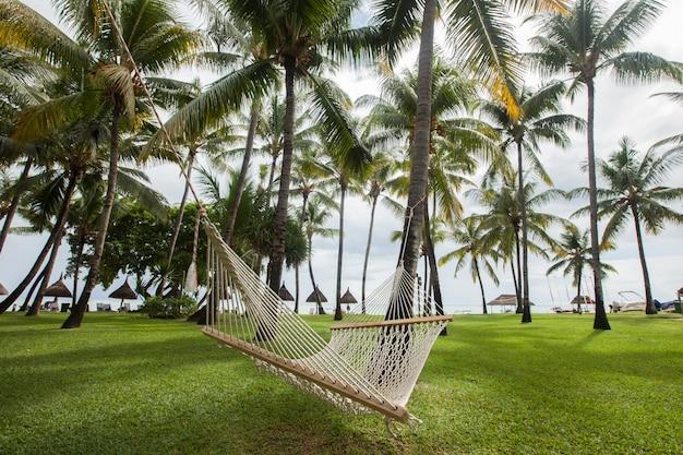 Tropische palmen und hängematte