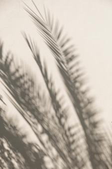 Tropische palmenblätter und sonnenlichtschatten auf neutraler beige wand