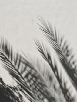 Tropische palmenblätter und sonnenlichtschatten auf neutraler weißer wand
