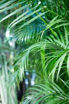 Tropische palmengrünblätter für naturmuster und hintergrund, strukturierte wand für eingabetext getönt.
