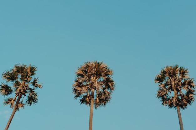 Tropische palmenkokosnussbäume auf sonnenuntergangshimmelfackel und bokeh naturhintergrund.