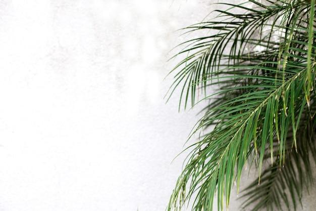 Tropische palmgrünblätter für naturmuster und hintergrund texturierte wand für eingabetext getönt